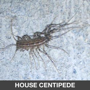 Pest Control Sentinel Pest Management Orange County