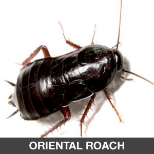 Pest Control : Sentinel Pest Management | Orange County Pest Control